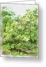 Greenstone Trail Greeting Card