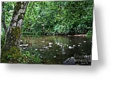 Greenwood Creek Greeting Card