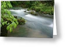 Greer Spring Branch 2 Greeting Card