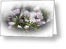 greeting card - Apple Blossoms  Greeting Card