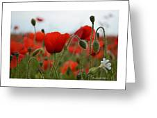 Greeting Card - Poppies In France Greeting Card