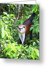 Grenada Monkey Greeting Card