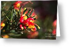 Grevillea Ground Cover Greeting Card