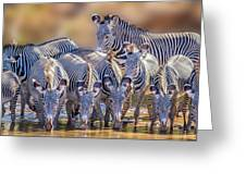 Grevy Zebra Party  7528 Greeting Card