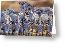 Grevy Zebra Party  7528c Greeting Card