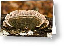 Grey Bracket Fungi Greeting Card
