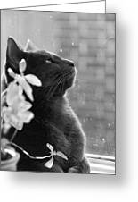 Grey Cat, Looking Up Greeting Card