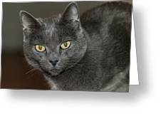 Grey Cat With Yellow Eyes Greeting Card