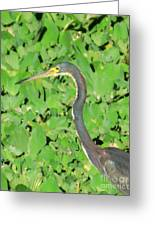 Grey Crane On Green Greeting Card