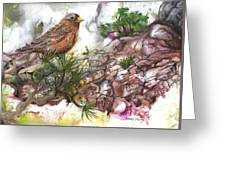 Grey Crown Rosy Finch Greeting Card