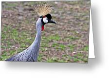 Grey Crowned Crain Of Africa 3 Greeting Card