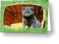 Grey Fluffy Kitten In Market Basket Greeting Card