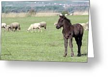Grey Foal On Pasture Farm Scene Greeting Card