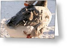 Grey Goose Grooming Greeting Card