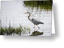 Grey Heron #3 Greeting Card