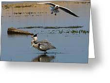 Grey Heron Being Mobbed Greeting Card