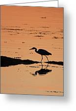 Grey Heron Sunset Greeting Card