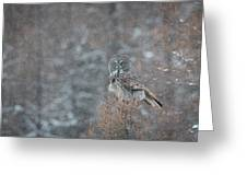 Grey In Snow Greeting Card