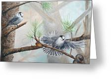 Grey Jays In A Jack Pine Greeting Card
