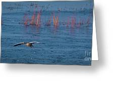 Grey Lag Goose In Flight Greeting Card