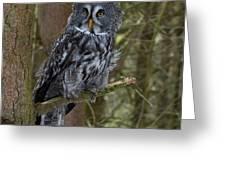Grey Owl 3 Greeting Card