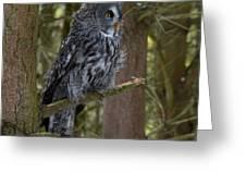Grey Owl 4 Greeting Card