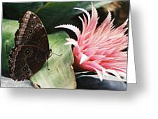 Grey Pansy Pink Bromeliad Greeting Card