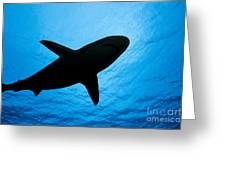 Grey Reef Shark Silhouette Greeting Card
