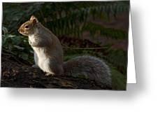 Grey Squirel Greeting Card