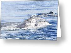 Grey Whale 2 Greeting Card