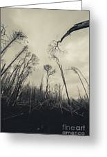 Grey Winds Bellow  Greeting Card