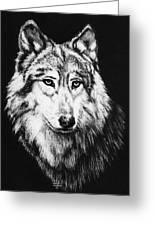 Grey Wolf Greeting Card by Melodye Whitaker