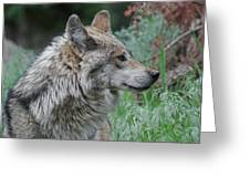 Grey Wolf Profile 2 Greeting Card