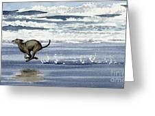 Greyhound At The Beach Greeting Card