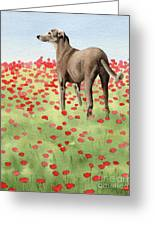 Greyhound In Poppies Greeting Card