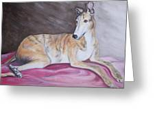 Greyhound Number 2 Greeting Card by George Pedro