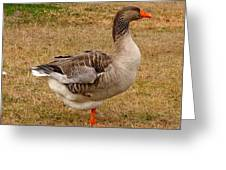 Greylag Goose 1 Greeting Card