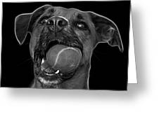 Greyscale Boxer Mix Dog Art - 8173 - Bb Greeting Card