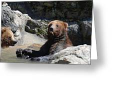 Grizzlies Snacking On Things They Find In A River Greeting Card
