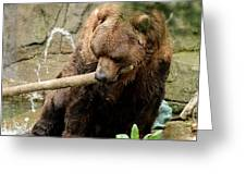 Grizzling Around Greeting Card