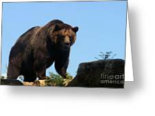 Grizzly-7747 Greeting Card