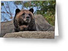 Grizzly Bear 1 Greeting Card
