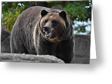 Grizzly Bear 3 Greeting Card