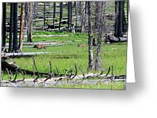 Grizzly Bear And Cub Cross An Area Of Regenerating Forest Fire Greeting Card