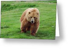 Grizzly Bear Approaching In A Field Greeting Card