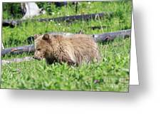 Grizzly Bear Cub In Yellowstone National Park Greeting Card