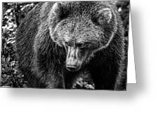 Grizzly Bear In Black And White Greeting Card