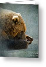Grizzly Bear Lying Down Greeting Card