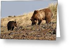 Grizzly Bear Mother And Cub Greeting Card