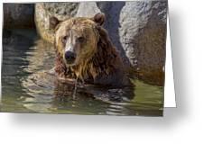 Grizzly Bear - San Diego Zoo Greeting Card